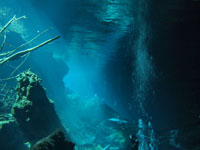 最も透明度の高い水セノーテの画像011