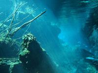 最も透明度の高い水セノーテの画像012