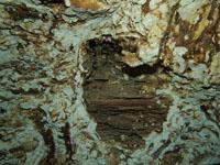 最も透明度の高い水セノーテの画像018