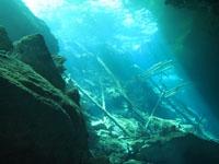 最も透明度の高い水セノーテの画像025