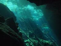 最も透明度の高い水セノーテの画像027