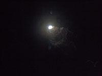 最も透明度の高い水セノーテの画像028
