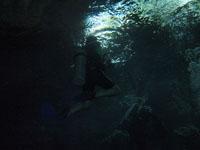 最も透明度の高い水セノーテの画像035