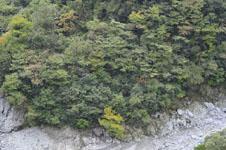 祖谷の渓谷の画像009