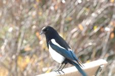 ロッキーの鳥の画像001