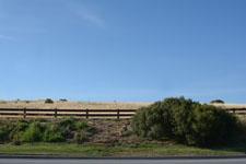 シリコンバレー 草原