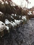 奈良井宿の凍った水路の画像003