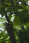 八ヶ岳の木の画像001