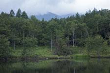 八ヶ岳の森の画像001