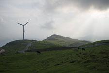 四国カルストの草原の画像002