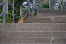 長崎の石段と猫の画像001