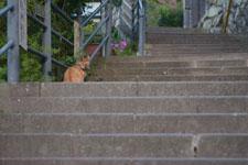 長崎の石段と猫の画像002