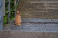 長崎の石段と猫の画像003