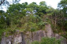 断崖の上に茂る木々