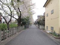 井の頭恩賜公園の散り始めの桜の画像003