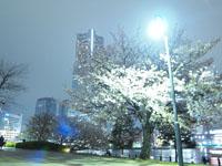 ランドマークタワーと夜桜の画像001