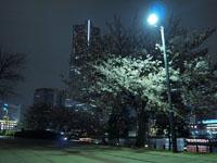 ランドマークタワーと夜桜の画像002