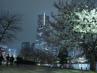 ランドマークタワーと夜桜の画像003