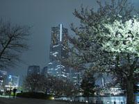 ランドマークタワーと夜桜の画像004