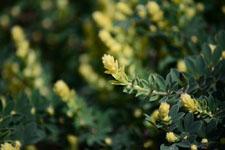園芸植物の葉の画像001