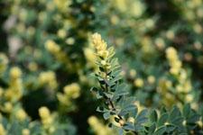 園芸植物の葉の画像002