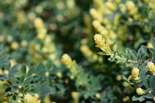 園芸植物の葉の画像004
