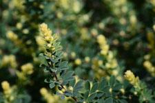 園芸植物の葉の画像005