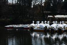 井の頭恩賜公園のスワンボート