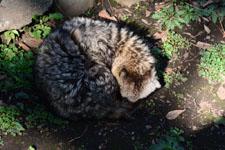 井の頭動物園の狸