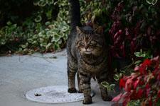 猫の画像001