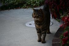 猫の画像002