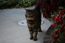 猫の画像003