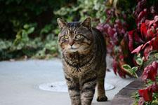 猫の画像004