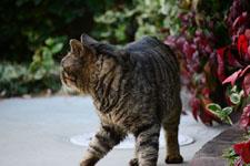 猫の画像005