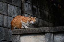 猫の画像013