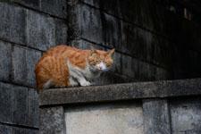 猫の画像014