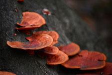木から生えるきのこの画像003