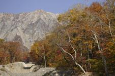 大山の紅葉の画像013