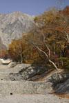 大山の紅葉の画像014