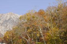 大山の紅葉の画像015