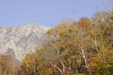 大山の紅葉の画像016