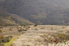 大山の紅葉の画像020