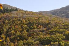 大山の紅葉の画像022
