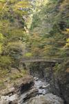 大山の紅葉の画像025