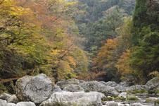 大山の紅葉の画像029