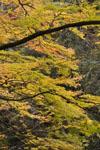 大山の紅葉の画像030