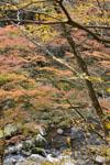 大山の紅葉の画像033