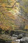 大山の紅葉の画像035