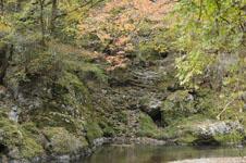 大山の紅葉の画像036