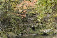 大山の紅葉の画像037